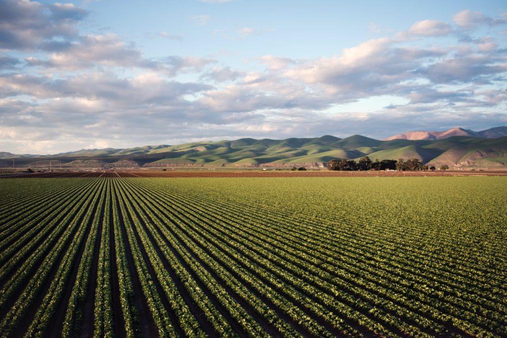 Kleine Hanf Anbauer haben jetzt bessere Chancen in den USA.