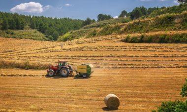 harvest-3914269_1920.jpg