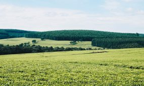 landscape-photography-of-green-field-1199689